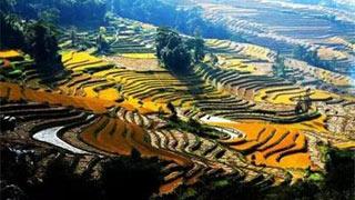 """中国""""农业文化遗产"""""""