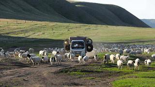 内蒙古30万头牲畜启程
