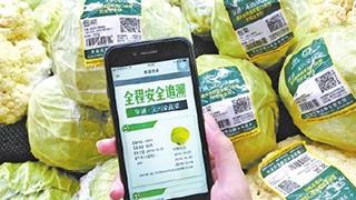 进口冷链食品追溯平台建立