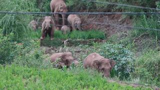 北上大象迂回十街乡已一周