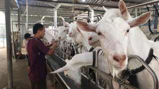 羊奶收购价同比上涨50%