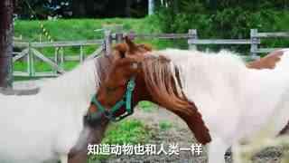 Hi走啦_20170908_你见过扎丸子头的马吗?